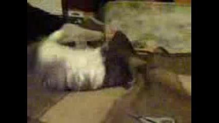 Палавата Маца