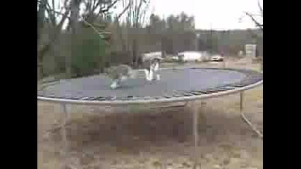 Котки Срещу Куче