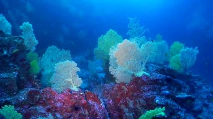 Дълбините на Канарските острови