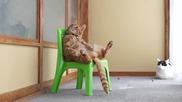 Котка седи на стол