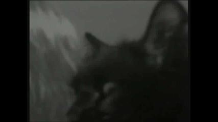 Mile Kitic - Zena i macka (hq)