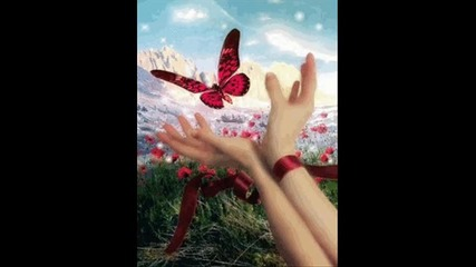 красиви пеперуди