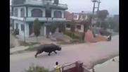 Избягал носорог уби жена и рани още шестима