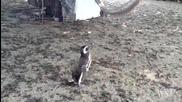 Пингвин плува 5000 мили всяка години, за да види спасителя си