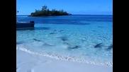 Бихте ли плували тук?