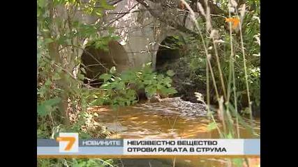 Река Струма е отровена !