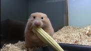 Хамстера и царевицата ..