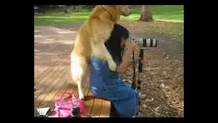 Куче Изнасилвач (смях)