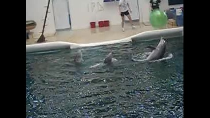 - Delfiinhiitaa .. [3]