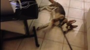 На Rikku май не му се ходи на разходка