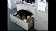 Котка От Следствието.flv