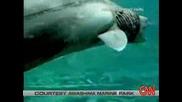 Невероятно праисторическа Акула беше намеренa