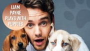 All the times Liam Payne was cuter than puppies