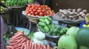 CAR Farmers Need Seeds Now, Cheaper Than More Food Aid Later