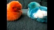 Сладки Цветни Пиленца