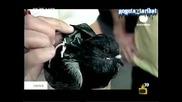 Гълъби Наркотрафиканти - Господари На Ефира 08.07.2008