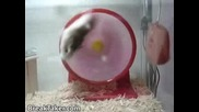 Funny Hampster