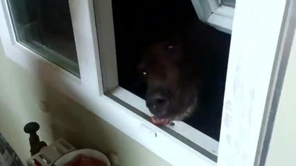 Ето защо трябва да затваряте прозорците си