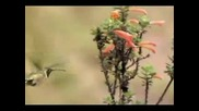 Jon and Vangelis - Bird Song