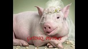 ! Кючек свински грип !