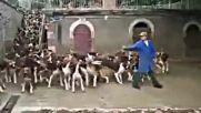 Вижте как се хранят 86 кучета наведнъж