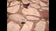 Ден 2 part 3 [ 29.05.12 ] Пица и гълъби