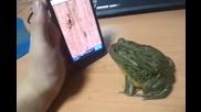 с гладна жаба шега не бива :d