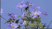Пролет в синьо - музика Oliver Shanti