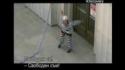 Ловци на митове - Бягство от затвора с тоалетна хартия - с Бг превод