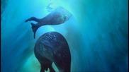 Bbc - как оцеляват тюлените в Антарктика