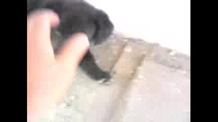 малък звяр