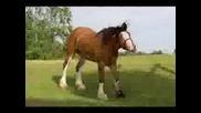 Тежковози(коне)