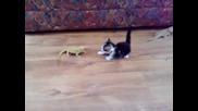 Сладко коте се закача с драконови гущери