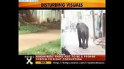 Побесняли слонове убиват хора