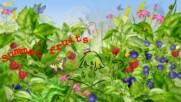 Даровете на природата - летни плодове! ...