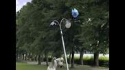 Backkom Полярното Мече: ballon
