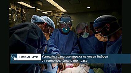 Успешно трансплантираха на човек бъбрек от генномодифицирано прасе