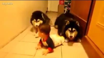 Тези кучета сякаш работят за тайните служби