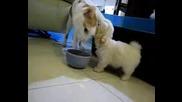 Малко Кученце И Котенце !! Сладурчета !!