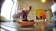 Куче отказва да се предаде и заслужено си хапва