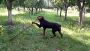 Нерон си играе с пръчка