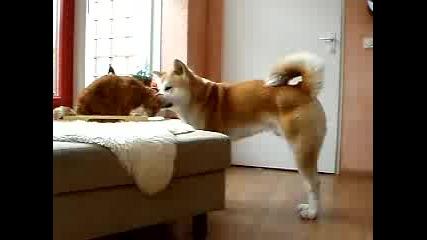 Котенце и Акита приятели