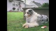 Куче с цигара Смяххххх