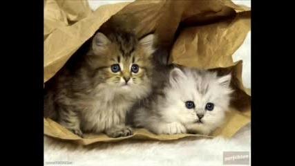Котенца И Кученца