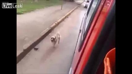 Куче на бездомен тича по линейката почти през целия път до болницата