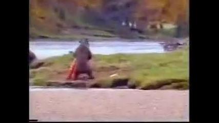 Мечка срещу рибар (смях)