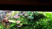 Див сладководен аквариум