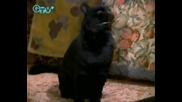 Sabrina,  the Teenage Witch - Събрина,  младата вещица 4 Сезон 12 Епизод - Бг Аудио