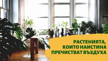 Растенията, които наистина пречистват въздуха