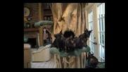 Малко Смях - Танцуващи Котки
